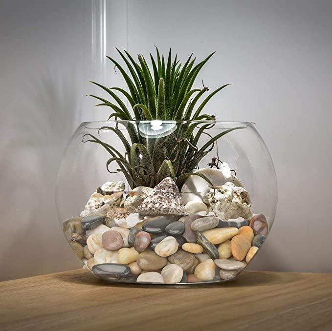 Mr. Fireglass  product image 6