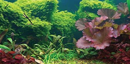 Aquatic Creations 879542004001 product image 1