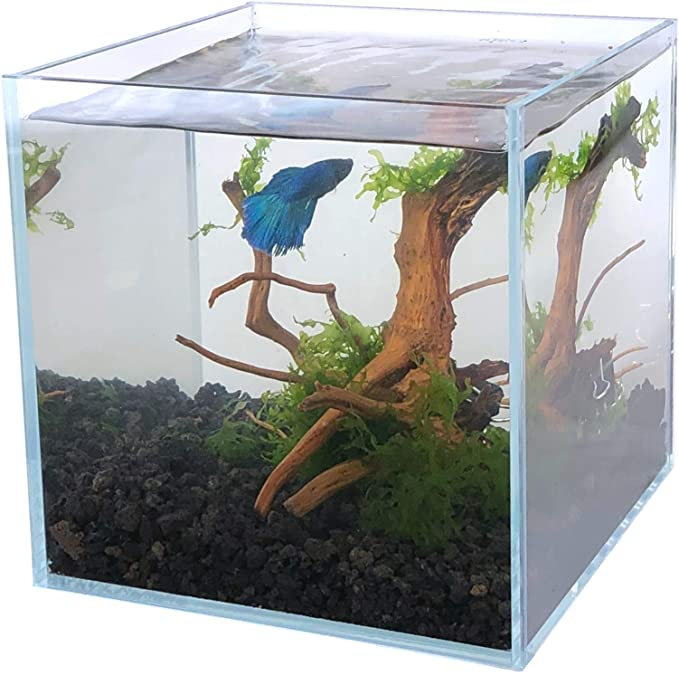 Boutique Betta  product image 5
