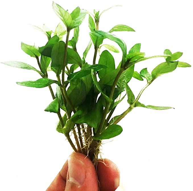 Planterest P278 product image 7