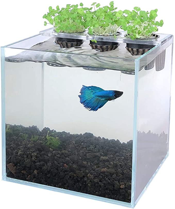Boutique Betta  product image 11
