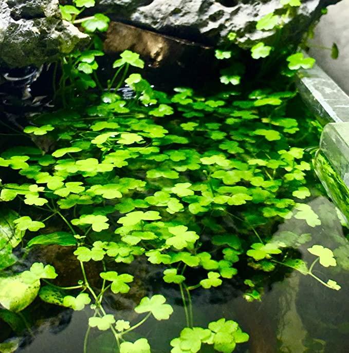 Greenpro  product image 5
