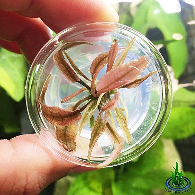 Greenpro  product image 11