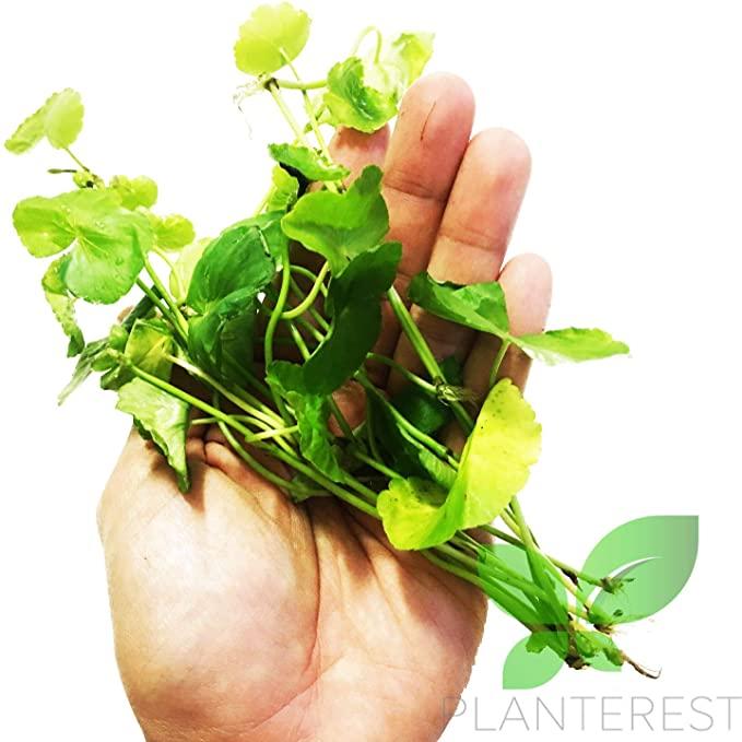 Planterest P093 product image 8