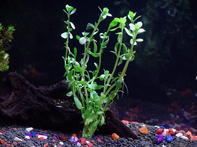 Aquarium Plants Discounts  product image 8