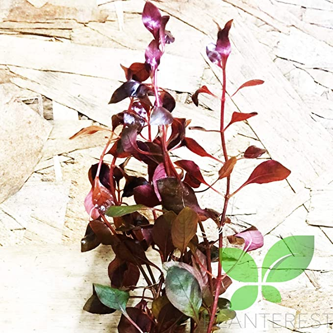 Planterest B292 product image 11