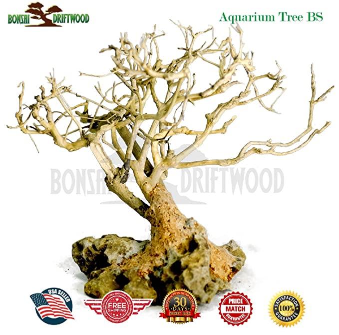 Bonsai Driftwood  product image 8