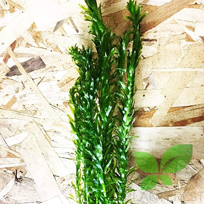 Planterest B062 product image 10