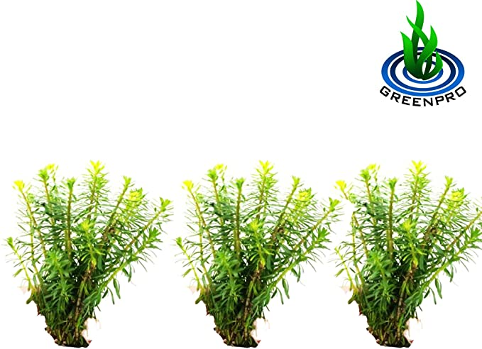 Greenpro B107 product image 6