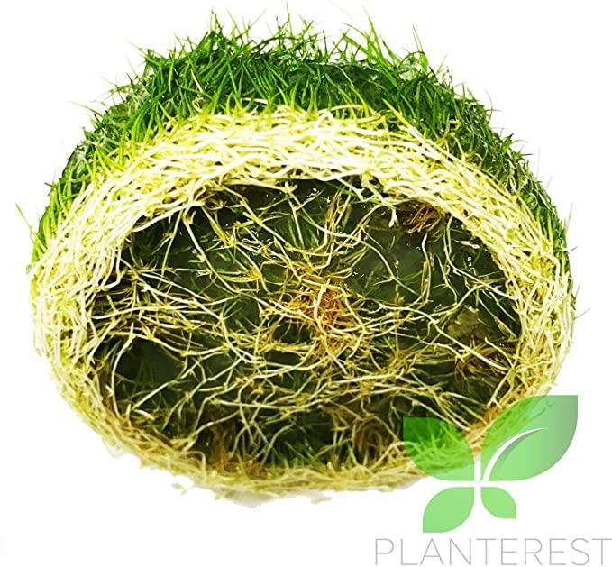Planterest  product image 11