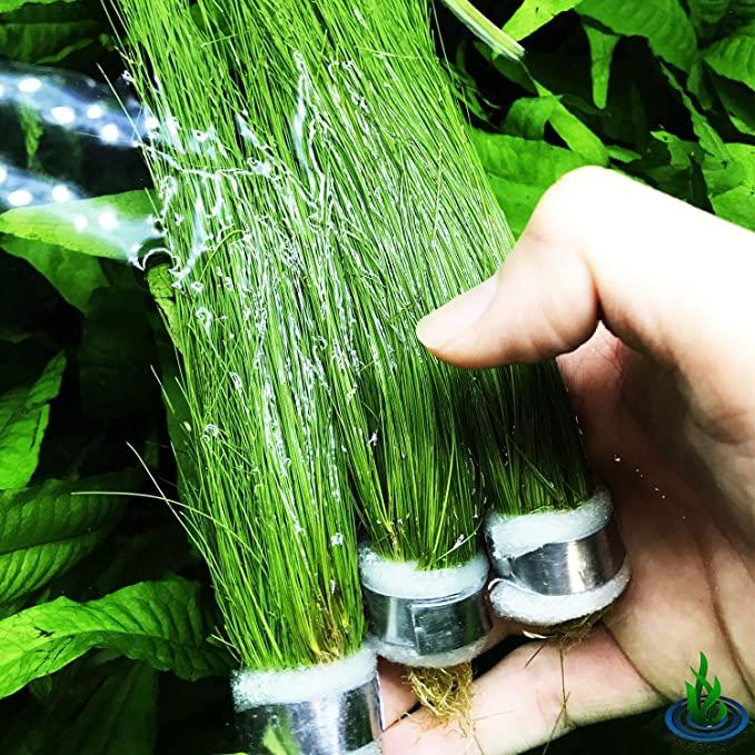 Greenpro  product image 3