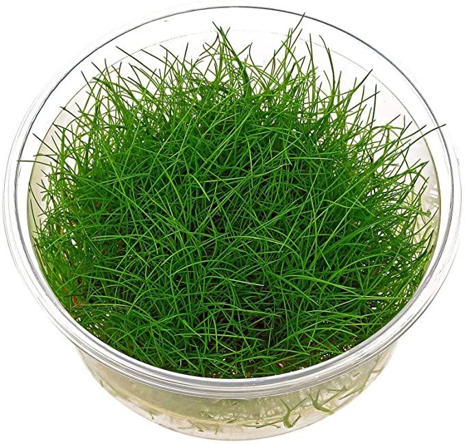 AquaPlants  product image 4