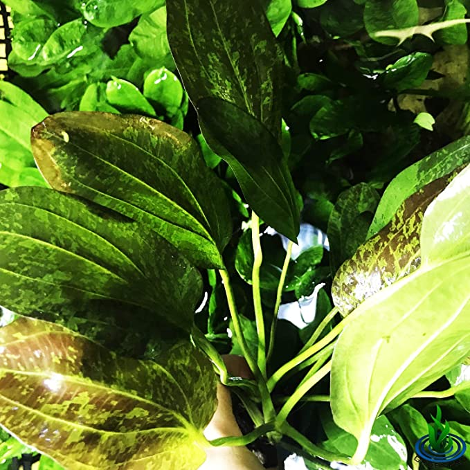 Greenpro P160 product image 7