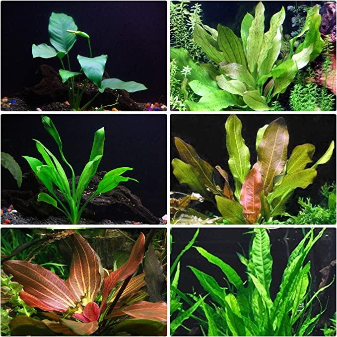 AquaLeaf Aquatics  product image 5