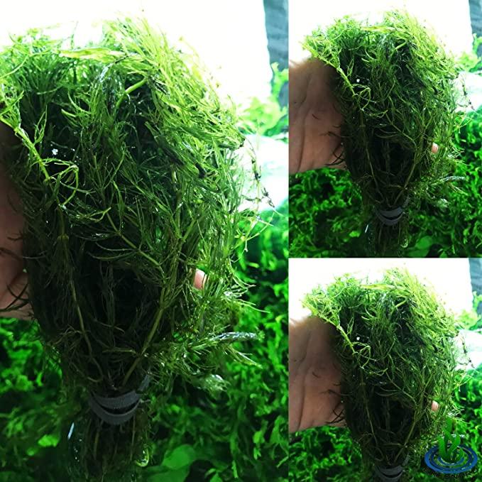 Greenpro 3xU201 product image 9