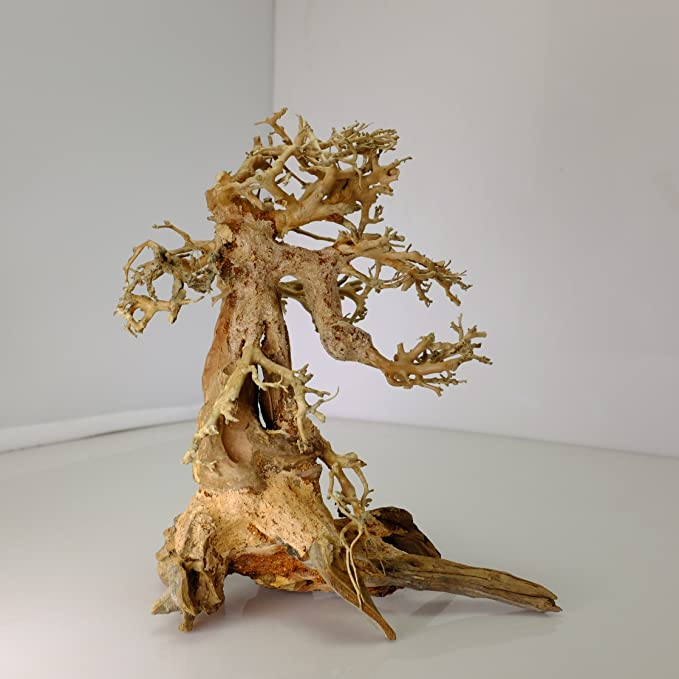 Bonsai Driftwood  product image 10