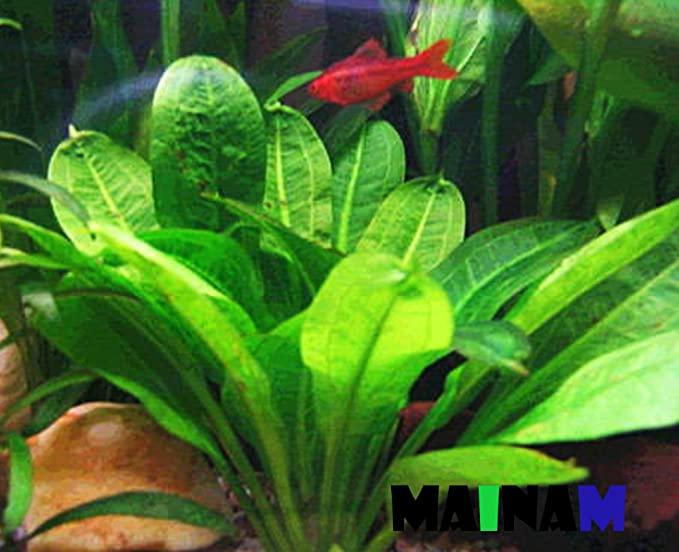 Mainam  product image 3