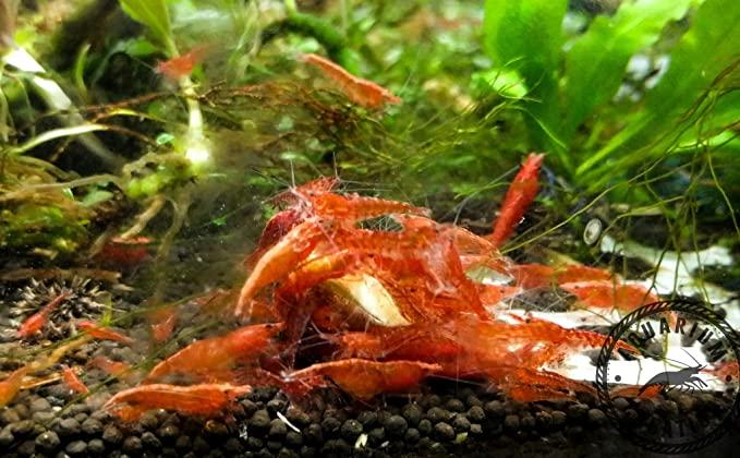 Aquarium Creation  product image 11