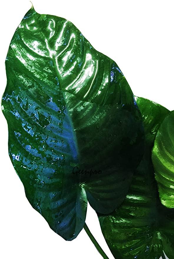 Greenpro  product image 10