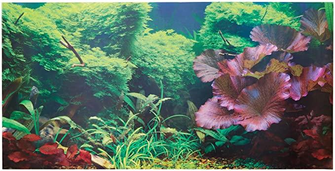 Aquatic Creations 879542004087 product image 10