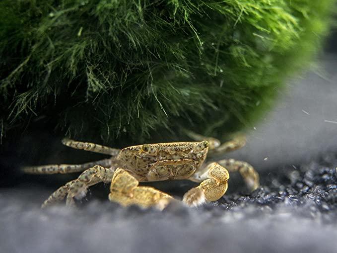 Aquatic Arts 10 Live product image 10